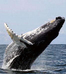 la-baleine-est-un-animal-gigantesque-a-cote-d-une-souris-comment-expliquer-cette-diversite_60438_w460