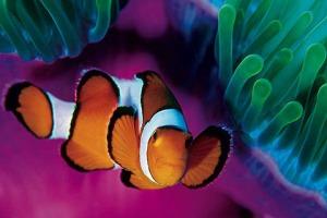 animaux subaquatiques (80)