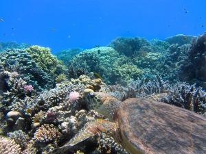 turtle-123284_640