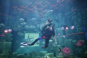 a l'Aquarium de Paris avec la FFESSM (78)