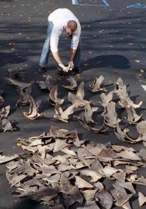 Shark_fins