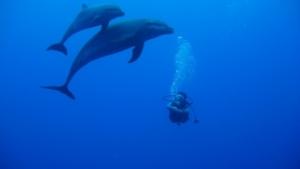 ballet dauphins -plongeur.jpg - BOUTEILLE_1