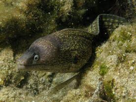 poisson 2