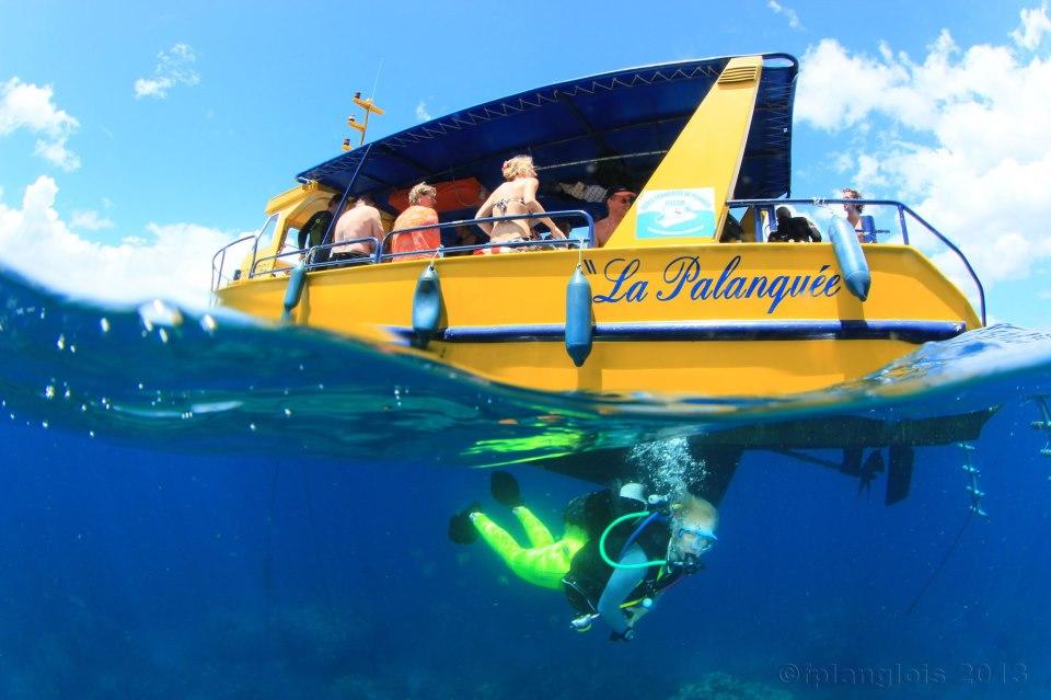 Rencontre entre plongeur