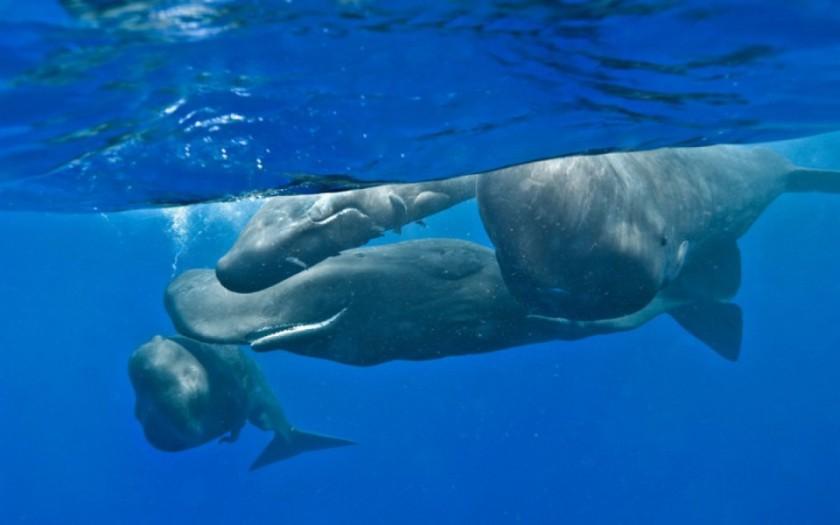 baleines-dauphins-christopher-swann-2