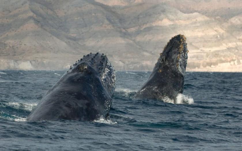 baleines-dauphins-christopher-swann-3