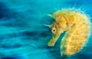 """Cette photo d'hippocampe a été élue titre de l'année. Favorite de la compétition elle a été décrite par le jury comme """"une photographie parfaite""""."""