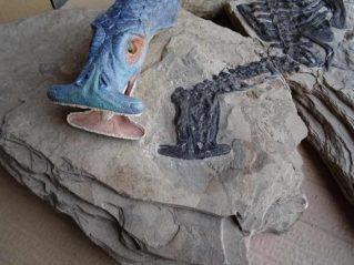 Le crâne fossilisé d'un Atopodentatus unicus.