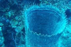 La plongée au Belize donne l'occasion d'admirer la flore marine particulièrement riche de cette partie du globe. PHOTO EVELYNE AUDET, LA PRESSE