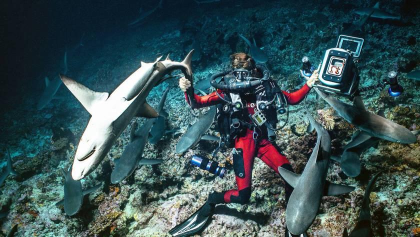 c4dbedd34494704f35ad6ff10dbe3a42-documentaire-plongee-au-coeur-d-une-horde-de-700-requins-gris-en-polynesie.jpg