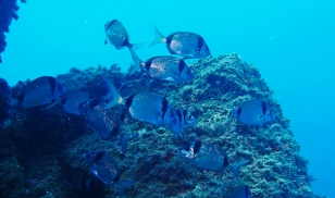 VoceMare-Diving-Tresor-1